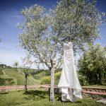 bride white dress on olive tree photo