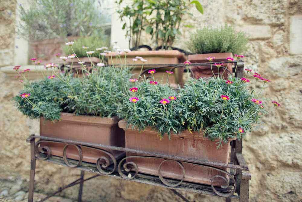tuscan rustic flower